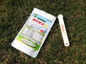 芝生日記#16|ポット苗の芝ティフトン419|除草剤シバゲンDFの効果