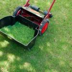 芝生日記#20|ポット苗の芝ティフトン419|芝刈り機が壊れた?!
